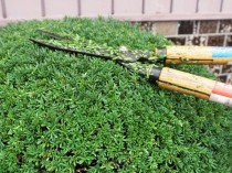 MV-Lets-keep-pruning-garden-trees-About-pruning-time-method-min